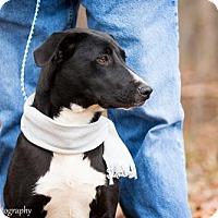Adopt A Pet :: Chris - Clarkesville, GA
