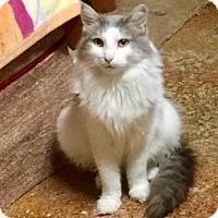 Adopt A Pet :: *IZZY - Sacramento, CA