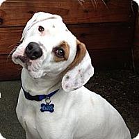 Adopt A Pet :: Tito - San Francisco, CA