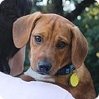 Adopt A Pet :: Mancy - Homewood, AL