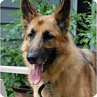 Adopt A Pet :: Ramses - Rigaud, QC