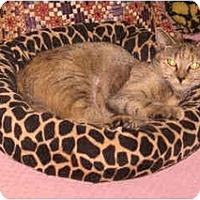 Adopt A Pet :: Meadow - Colmar, PA