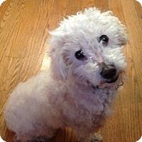 Adopt A Pet :: Tristan - San Francisco, CA