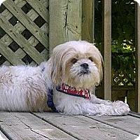 Adopt A Pet :: Suzy - Vaudreuil-Dorion, QC