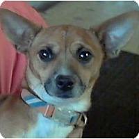Adopt A Pet :: Bentley - Duluth, GA