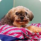 Adopt A Pet :: Nino