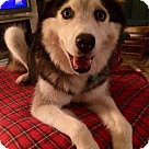Adopt A Pet :: Lexi Adoption Pending Congrats Shannon!
