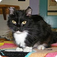 Adopt A Pet :: Bolonga - Dover, OH