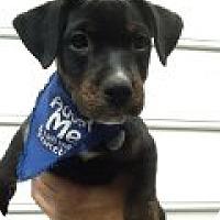 Adopt A Pet :: Captain - Richmond, VA