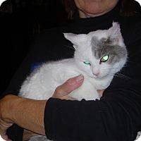 Adopt A Pet :: Peppa - New Carlisle, OH