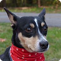 Cedar Farm Dog Rescue Mocksville Nc