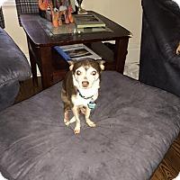 Adopt A Pet :: Jose - st peters, MO