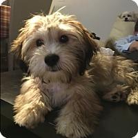 Adopt A Pet :: Huey - Long Beach, NY