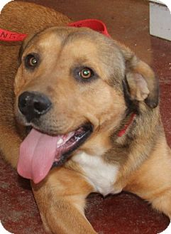 Shepherd (Unknown Type) Mix Dog for adoption in Savannah, Missouri - Lucas