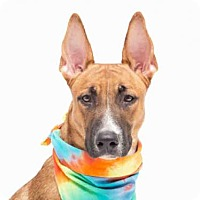 Adopt A Pet :: TEEGAN - Orlando, FL