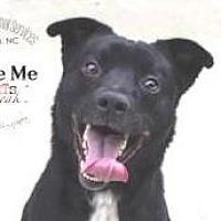 Adopt A Pet :: Ace - Lincolnton, NC