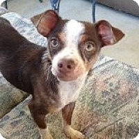 Adopt A Pet :: Beatrice - Winchester, CA