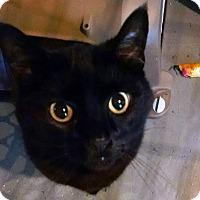 Adopt A Pet :: Jack - Geneseo, IL
