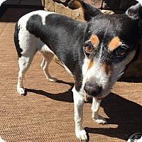 Adopt A Pet :: Sassy - Concord, CA