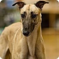 Adopt A Pet :: Blair - Aurora, IN