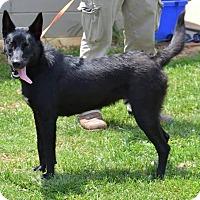 Adopt A Pet :: Titan - Greeneville, TN