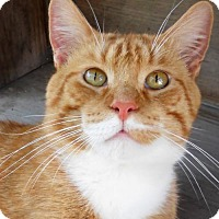 Adopt A Pet :: Stan - Siren, WI
