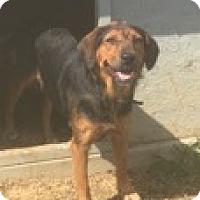 Shepherd (Unknown Type) Mix Dog for adoption in Medora, Indiana - Olive
