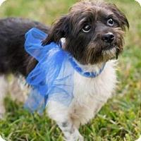 Adopt A Pet :: Pee Wee - Santa Fe, TX