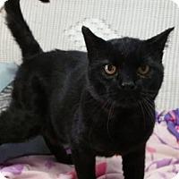 Adopt A Pet :: Mojo - Springfield, VT