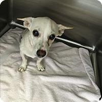 Adopt A Pet :: Jovanni - Phoenix, AZ