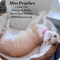 Adopt A Pet :: Miss Peaches - Temecula, CA