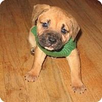 Adopt A Pet :: Calysta - Alpharetta, GA