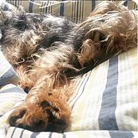Adopt A Pet :: Theodore! - New York, NY