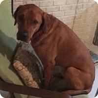 Adopt A Pet :: Otis - West Allis, WI