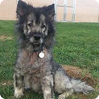 Adopt A Pet :: GINA - Southern California, CA