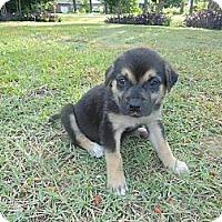 Adopt A Pet :: Dina - New Boston, NH