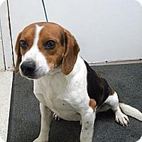 Adopt A Pet :: Barney - Lancaster, VA