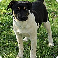 Adopt A Pet :: Colton - Staunton, VA