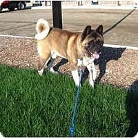 Adopt A Pet :: Okami - East Amherst, NY