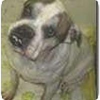 Adopt A Pet :: Vinny - Winder, GA