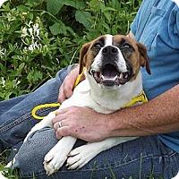 Adopt A Pet :: Meg - Bardonia, NY