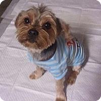 Adopt A Pet :: JoJo - Encinitas, CA