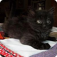 Adopt A Pet :: Hootie - Acme, PA