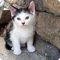Adopt A Pet :: Dominio - Barnegat, NJ