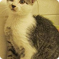 Adopt A Pet :: Violet - Seminole, FL