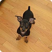 Adopt A Pet :: Skye - Perris, CA