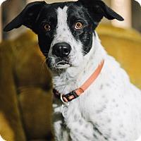 Adopt A Pet :: Deeogie - Portland, OR
