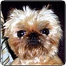 Adopt A Pet :: VIRGINIA VOLUNTEERS NEEDED!
