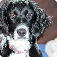 Adopt A Pet :: KONA - Pine Grove, PA