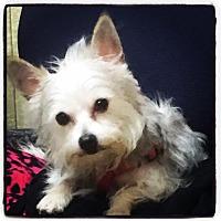 Adopt A Pet :: Stewart - Eastpointe, MI